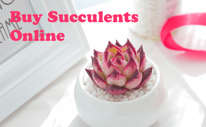 How to Identify My Succulent Correctly? 4 Proven Ways