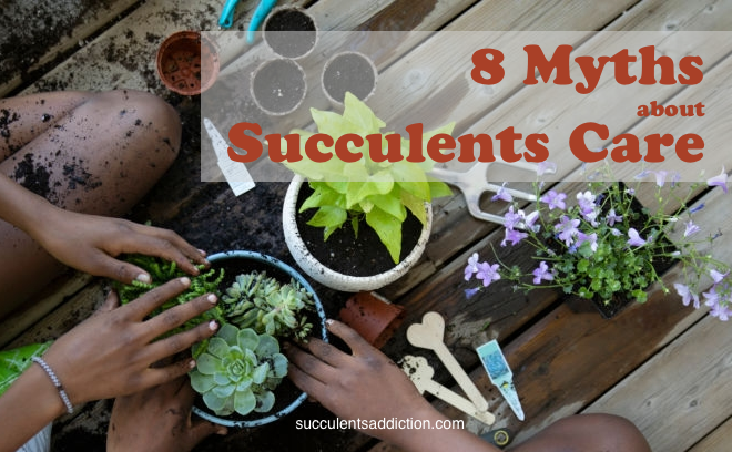 succulents care myths