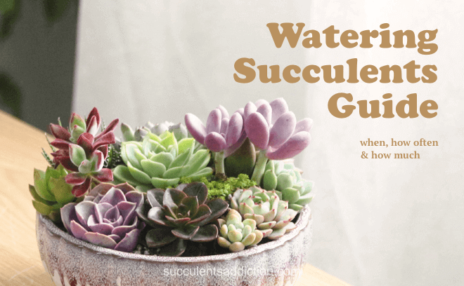 water succulents guide