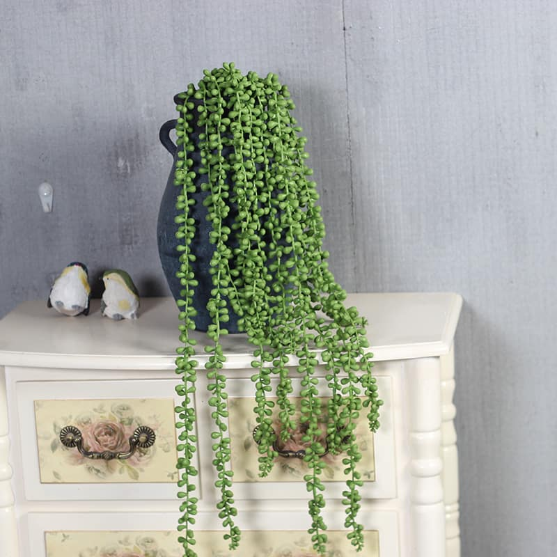 String of Pearls Plant Care Guide